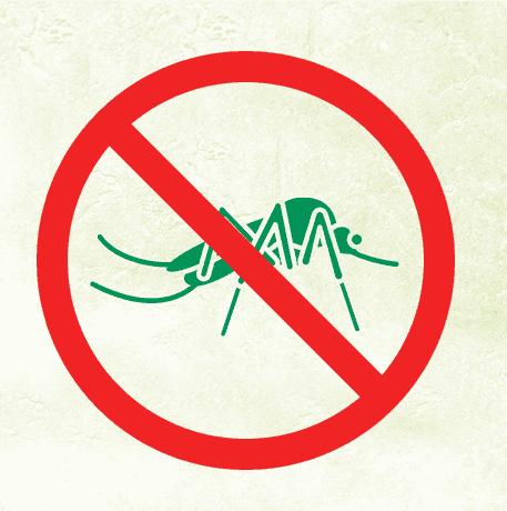 A importância de evitar a proliferação de mosquitos